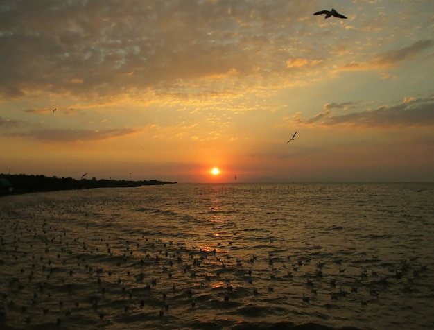 Beautiful view of sun rising over the gulf of thailand with uncountable seagulls