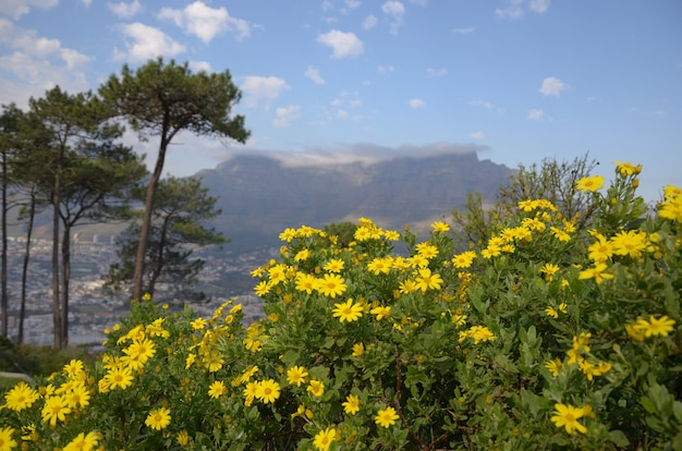 Beautiful view of table mountain and nature, cape town, south africa