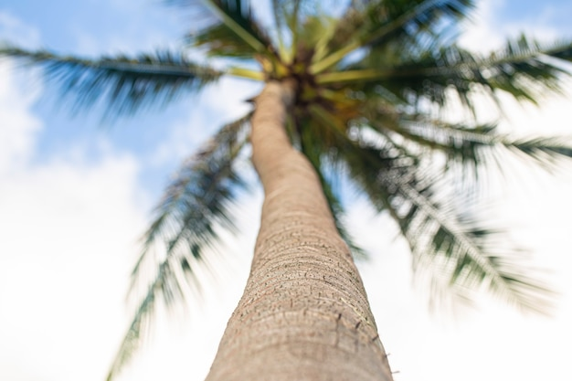 Beautiful view of a tall tropical palm tree from below.