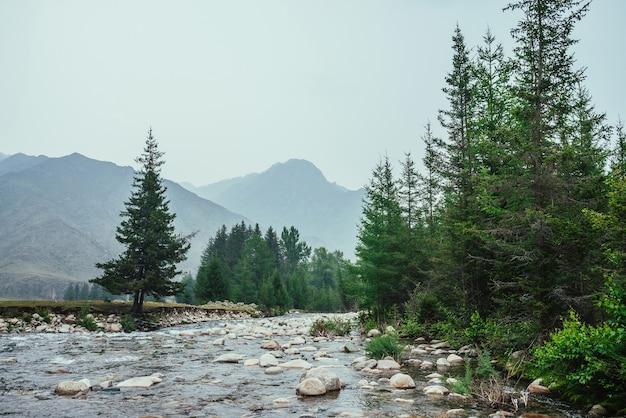 Прекрасный вид на горный ручей с множеством камней в чистой воде среди елей и растительности. атмосферный пейзаж с горной рекой среди деревьев и больших гор. живописный пейзаж высокогорной природы.