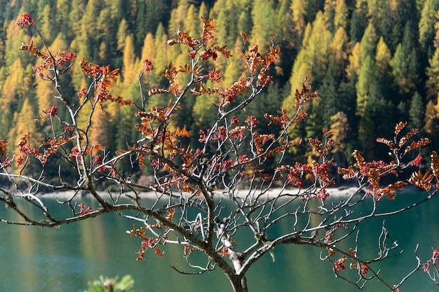 Beautiful view of a tree with red leaves, a lake, and a forest