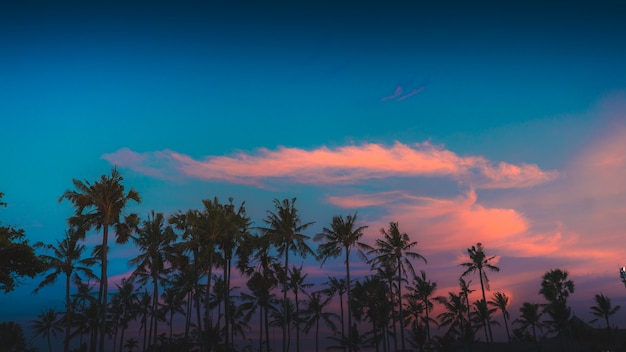 Beautiful view of the trees under the colorful and cloudy sky captured in bali