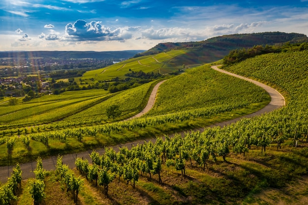 Beautiful view of a vineyard in the green hills at sunset