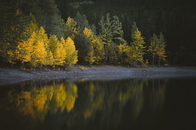 Beautiful view of water near the forest with green and yellow trees