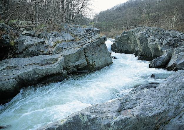 Bella vista sul ruscello d'acqua nella foresta circondata da alberi con rami spogli