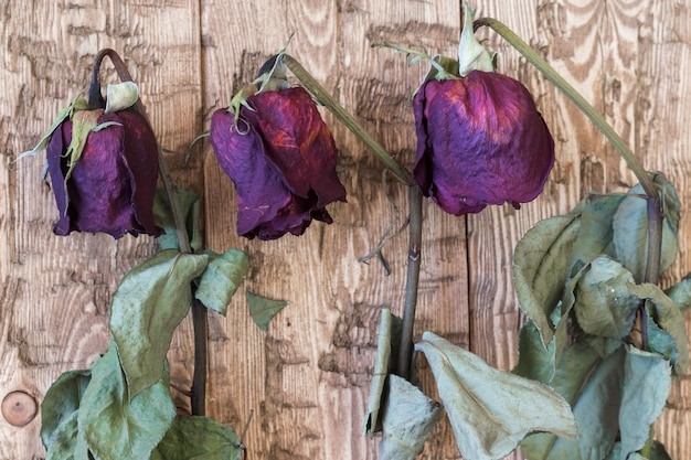 Beautiful vintage wilted roses on a rustic background.