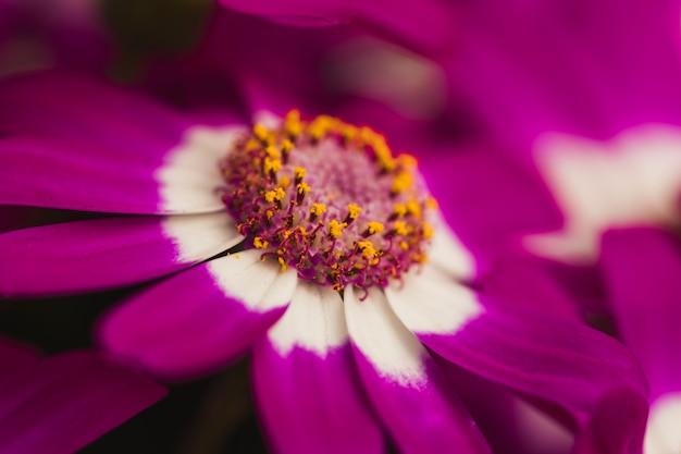 Beautiful violet fresh flower