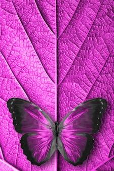 아름 다운 보라색 열 대 나비 절연입니다.