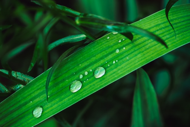 Beautiful vivid shiny green grass with dew drops close-up with copy space.