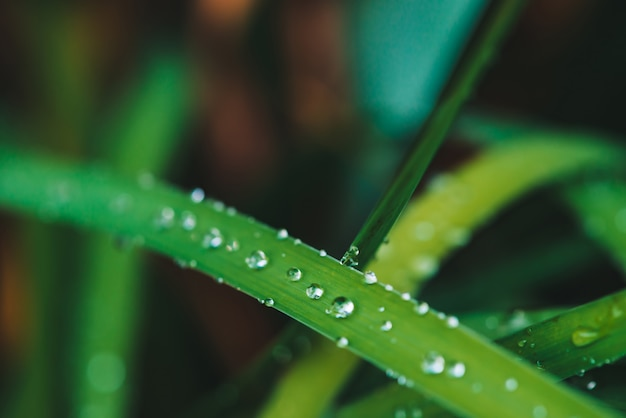 Beautiful vivid shiny green grass with dew drops close-up with copy space