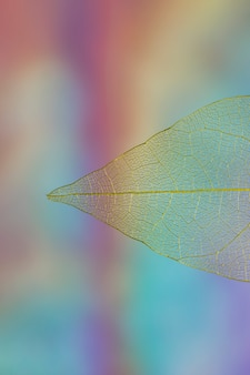 Beautiful vivid transparent fall leaf