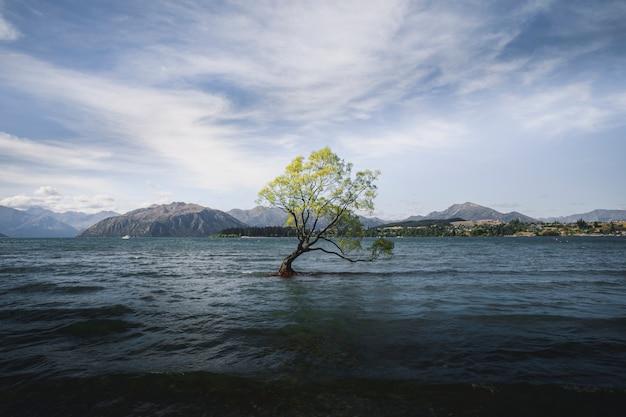 ニュージーランドの湖に浮かぶ美しいワナカの木