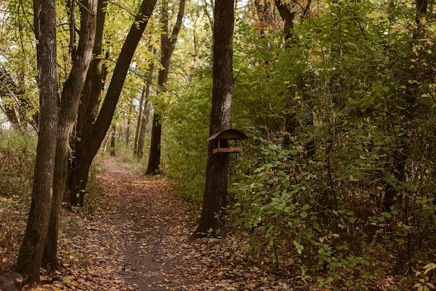 걷는 경로와 나무 줄기에 매달려 나무 새 피더 집 아름 다운 따뜻한 숲 배경