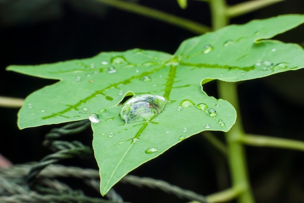 Beautiful water  drop on green leaf macro background.