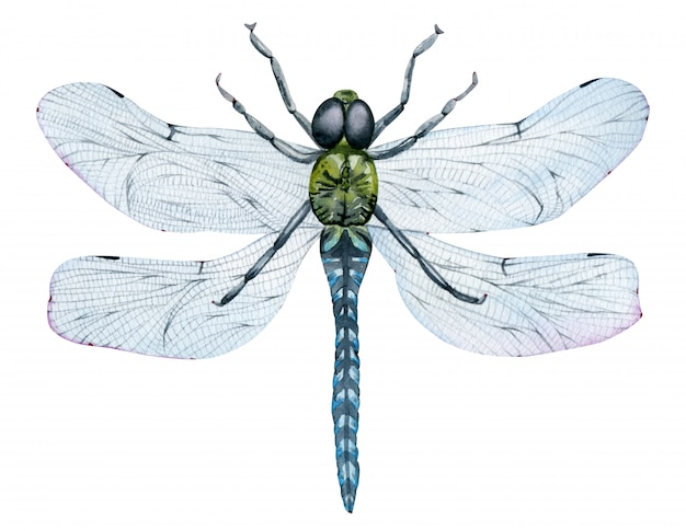 Beautiful watercolor flying green dragonfly with blue wings. hand-drawn insect.