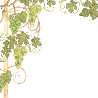 Beautiful watercolor hand drawn grapes frame in green and yellow colors.