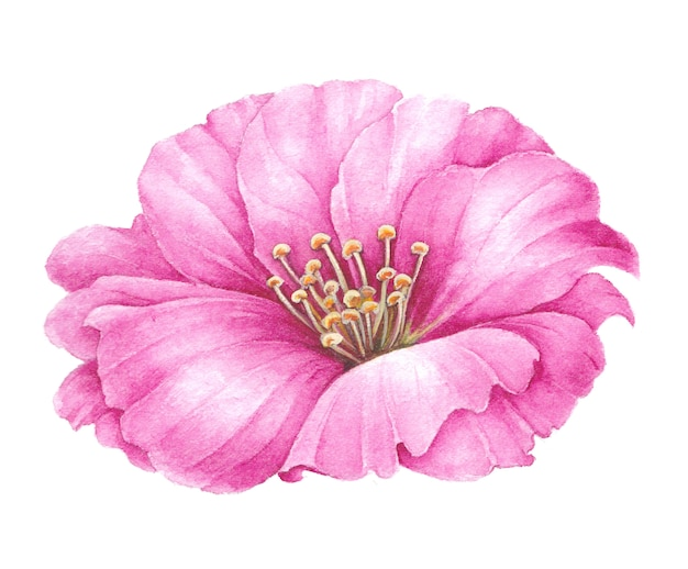 Beautiful watercolor illustration with pink tea rose