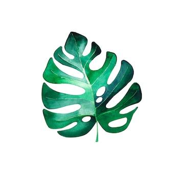 モンステラ植物の美しい水彩画の葉。