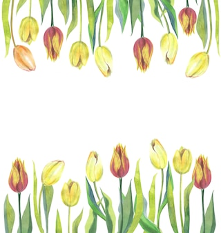 Beautiful watercolor tulips banner template isolated on white.