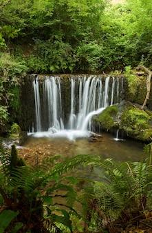 San pedro de incio라는 이름으로 알려진 스페인 갈리시아의 숲에 있는 아름다운 폭포.