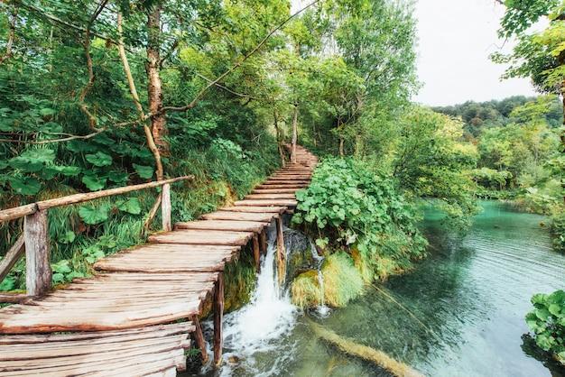 Красивый водопад в летний зеленый лес.