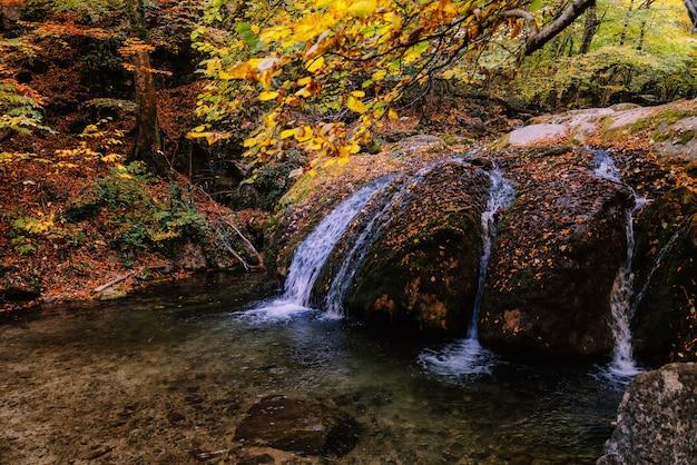 渓流の秋の森の美しい滝