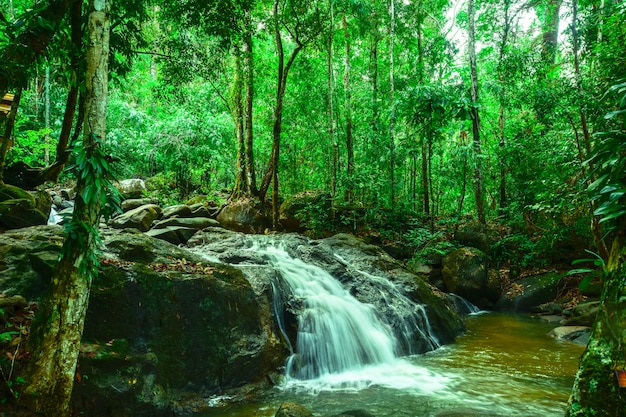 Beautiful waterfall in a large forest.