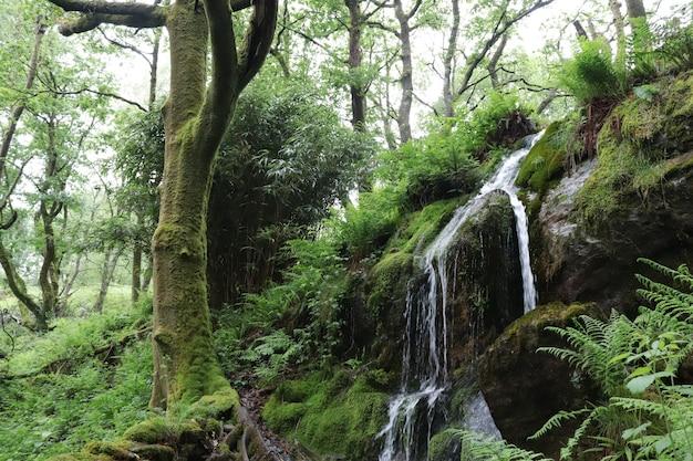 森の中の美しい滝の小川
