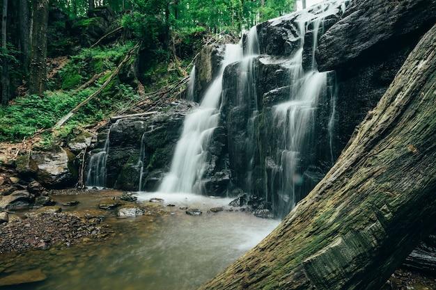 あなたの広告のための前景に木がある美しい滝