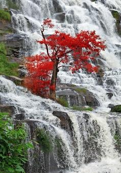 タイ北部の美しい滝。
