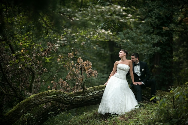 Beautiful wedding couple sitting in the woods on a fallen tree