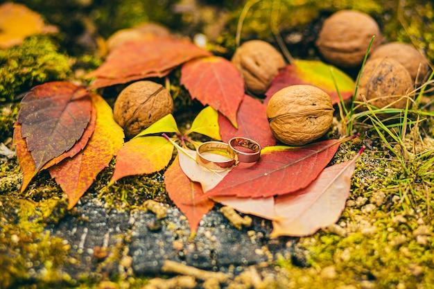 Beautiful wedding rings on autumn leaves