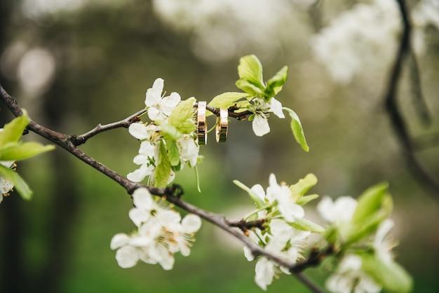 아름 다운 결혼 반지는 꽃 나무, 봄 결혼 개념의 지점에 걸어