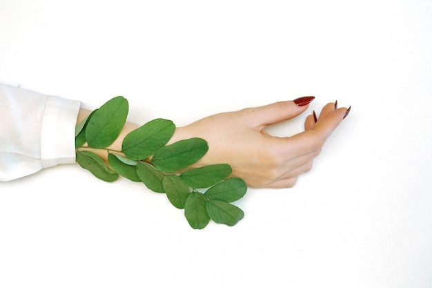 Beautiful well-groomed female hands on white background, green leaves.