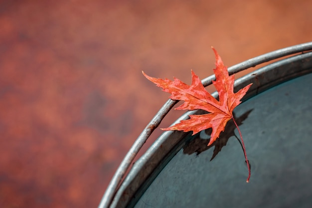Beautiful wet red maple leaf on the edge of the tin bucket with water.