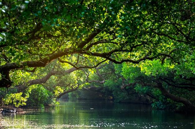 Красивые водно-болотные угодья sicao mangrove green tunnel