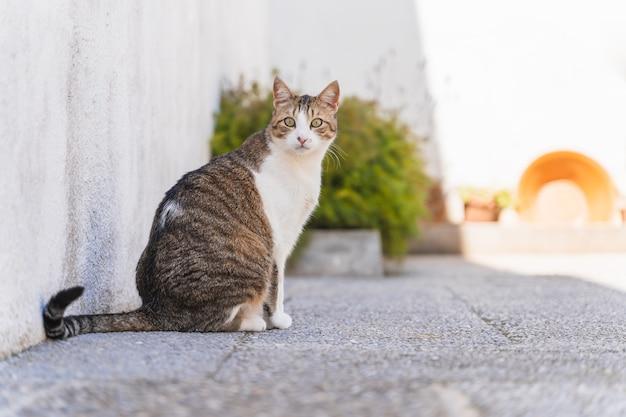 Красивая белая и разноцветная взрослая кошка смотрит прямо перед собой на террасу