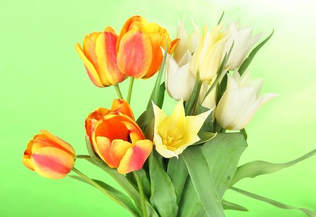 緑の美しい白とオレンジのチューリップ
