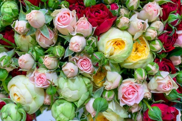 아름다운 흰색과 분홍색 장미. 꽃 축제 자연 배경입니다.