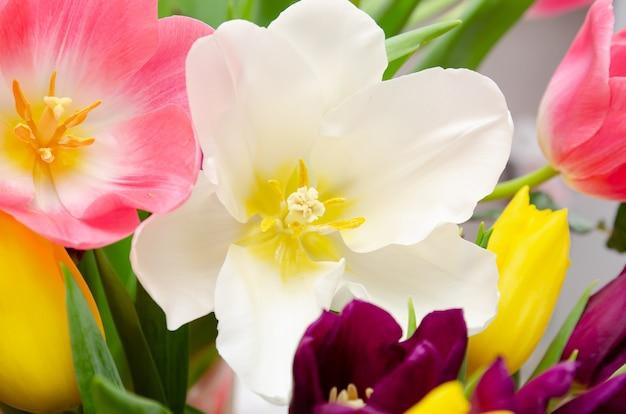 Красивые белые и розовые тюльпаны