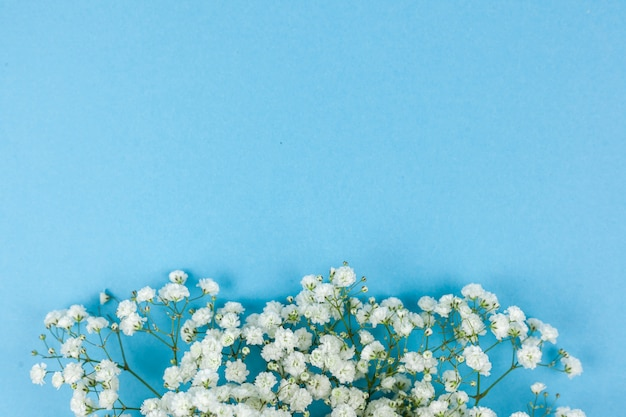 Beautiful white baby's breath flowers arranged on blue backdrop