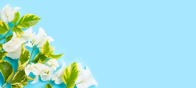 青い背景に緑黄色の葉を持つ美しい白いブーゲンビリアの花。コピースペース