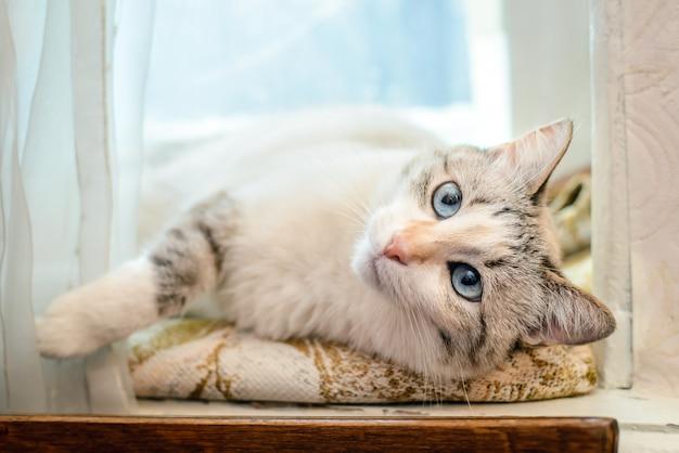 Beautiful white cat lying on the windowsill
