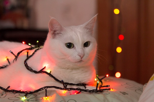 Beautiful white cat sits wrapped in garland