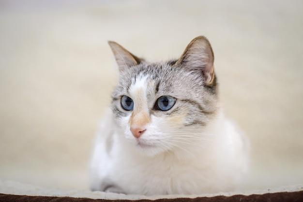 Красивый белый кот с голубыми глазами лежит на диване и смотрит в сторону