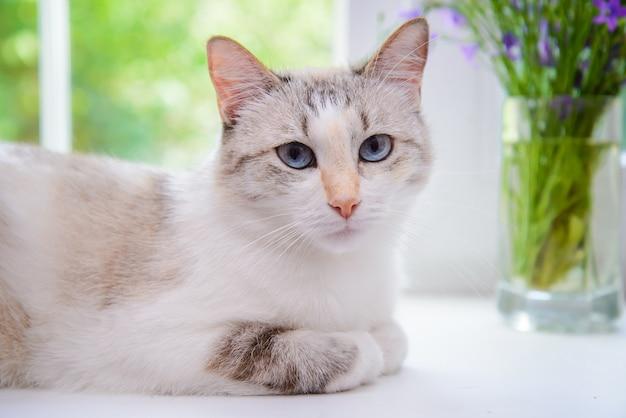 Красивая белая кошка с голубыми глазами, лежащая на подоконнике