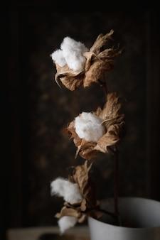 Красивые белые цветы хлопка на темном фоне. нежные и пушистые цветы в сдержанном ключе.