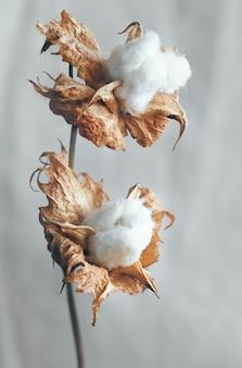 Красивые белые цветы хлопка на фоне. нежные и пушистые цветы.