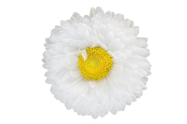 クリッピングパスを含む白い表面に分離された、小さなピンクの美しい白いデイジーマーガレット。 Premium写真