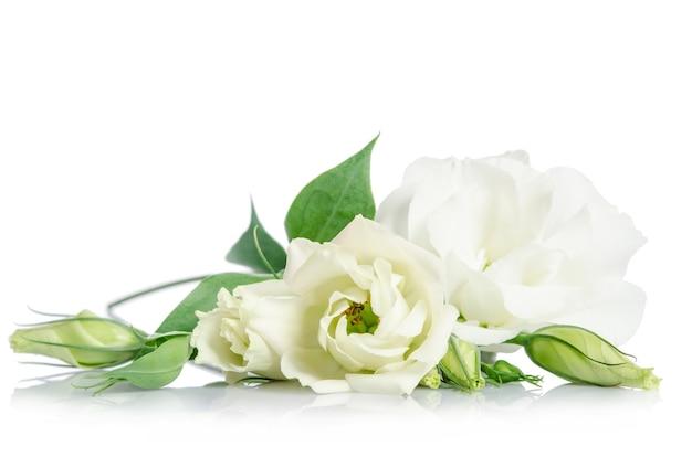 Beautiful white eustoma flowers isolated